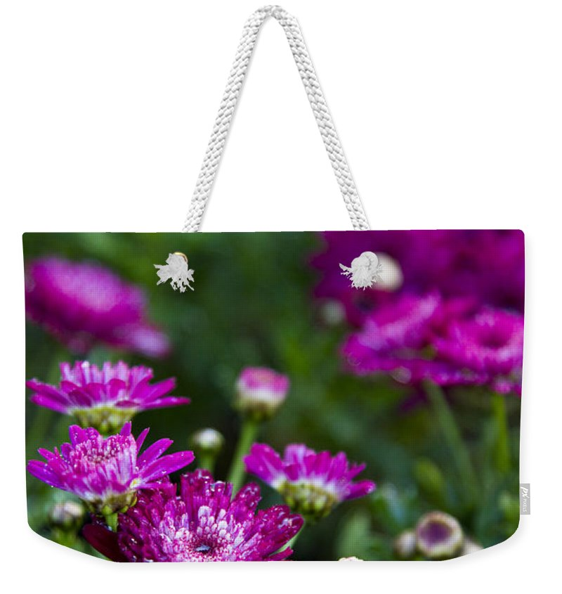 Fuschia Mums Weekender Tote Bag featuring the photograph Fuschia Mums 2 by Jessica Velasco