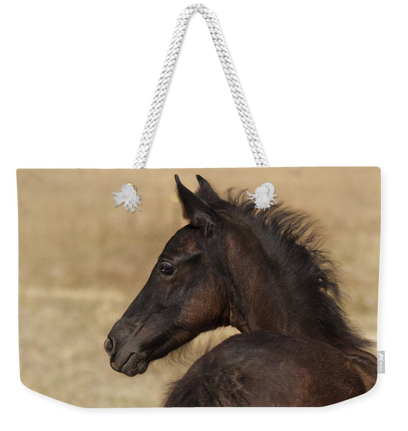 Fuzzy Colt Weekender Tote Bag featuring the photograph Fuzzy Colt by Wes and Dotty Weber