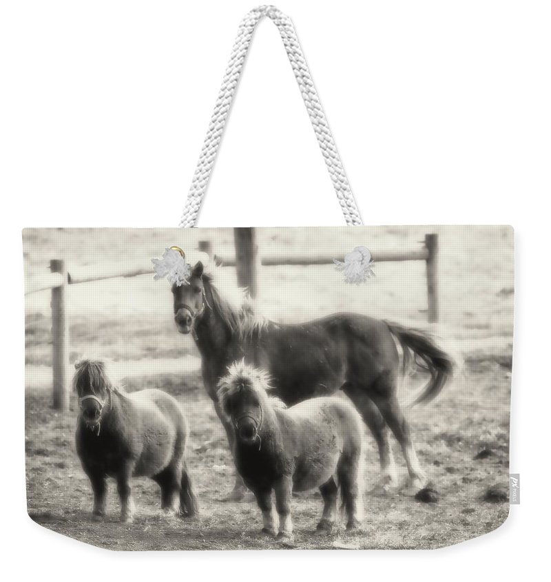 Ponies Weekender Tote Bag featuring the photograph Fuzzy Ponies by Alice Gipson