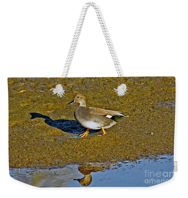Animal Weekender Tote Bag featuring the photograph Gadwall Drake On Mudflat by Anthony Mercieca