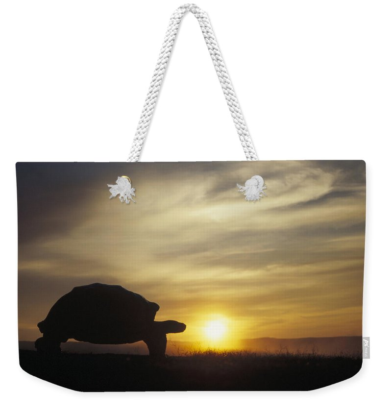 Feb0514 Weekender Tote Bag featuring the photograph Galapagos Giant Tortoise At Sunrise by Tui De Roy