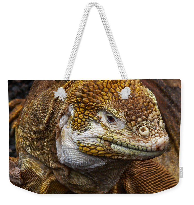 Galapagos Weekender Tote Bag featuring the photograph Galapagos Land Iguana by Allen Sheffield