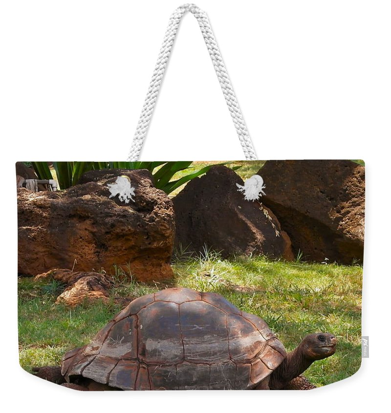 Galapagos Turtle Weekender Tote Bag featuring the photograph Galapagos Turtle At Honolulu Zoo by Michele Myers