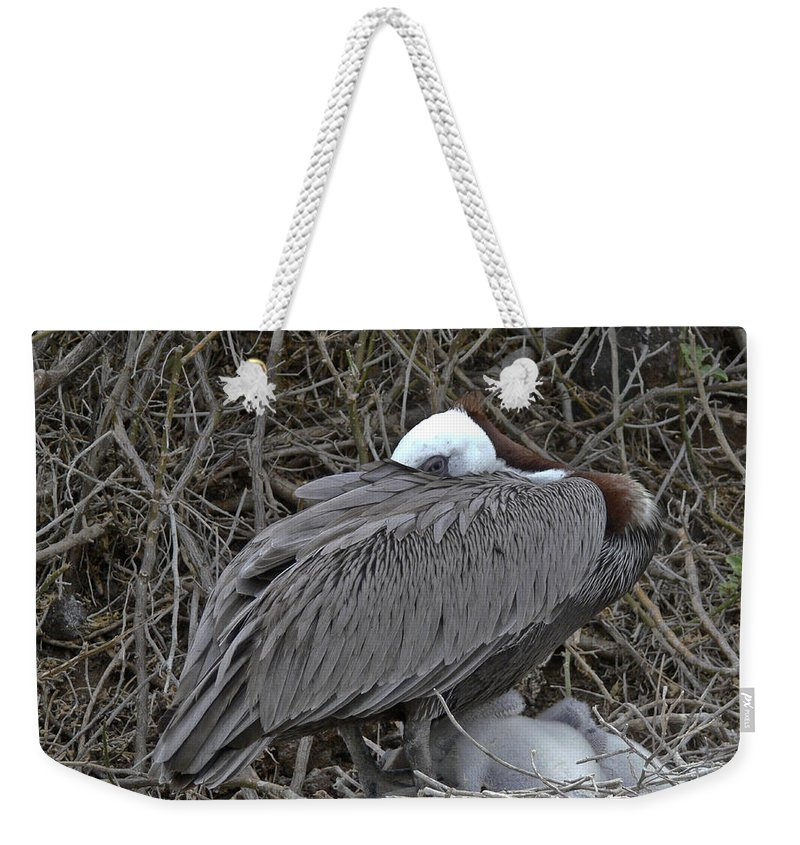 Galapagos Weekender Tote Bag featuring the photograph Galapagos - Watchful Pelican by Allen Sheffield