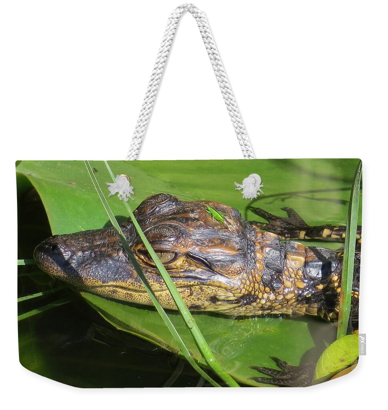 Swamp Weekender Tote Bag featuring the photograph Gator Baby's Head by Zina Stromberg