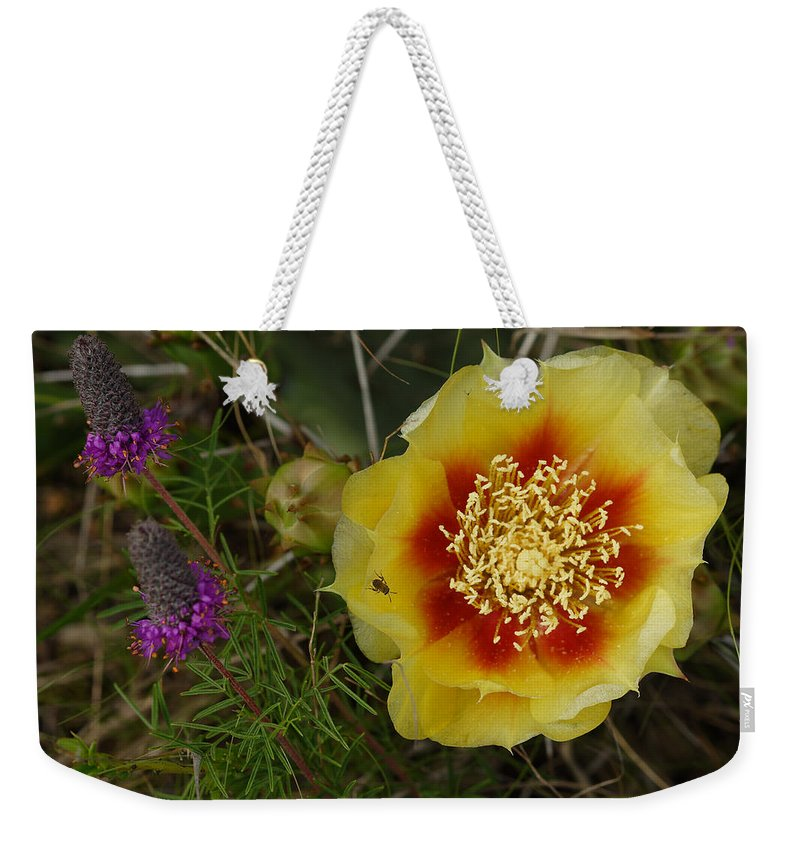 Gattinger's Prairie Clover And Prickly Pear Flower Weekender Tote Bag featuring the photograph Gattinger's Prairie Clover And Prickly Pear Flower by Daniel Reed