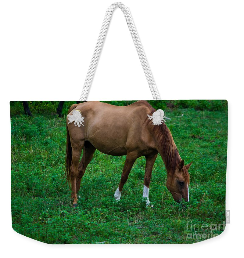 Graze Weekender Tote Bag featuring the photograph Gazing Horse by Scott Hervieux