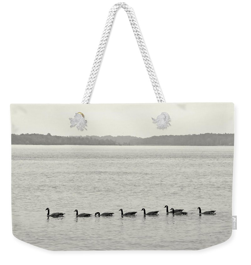 Nature Weekender Tote Bag featuring the photograph Geese In A Row by Peg Urban
