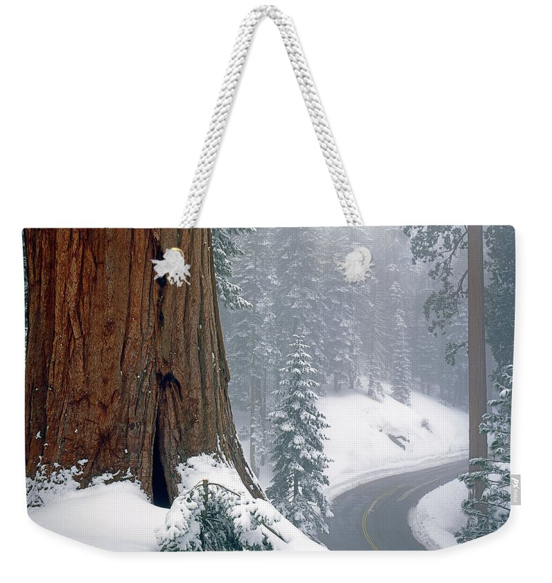 Generals Highway Weekender Tote Bag featuring the photograph 2m6836-generals Highway In The Giant Sequoias by Ed Cooper Photography