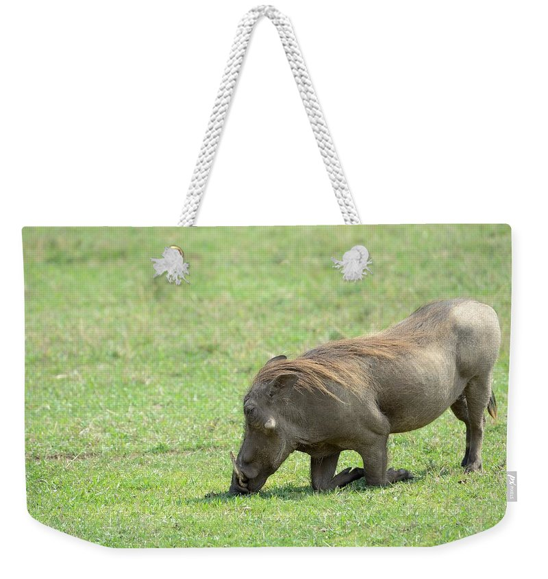 Warthog Weekender Tote Bag featuring the photograph Genuflect by Ian Ashbaugh