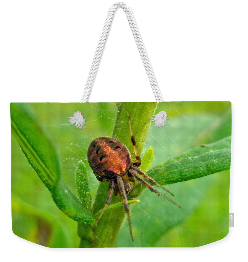 Araneus Weekender Tote Bag featuring the photograph Genus Araneus Orb Weaver Spider - Brown And Orange by Mother Nature