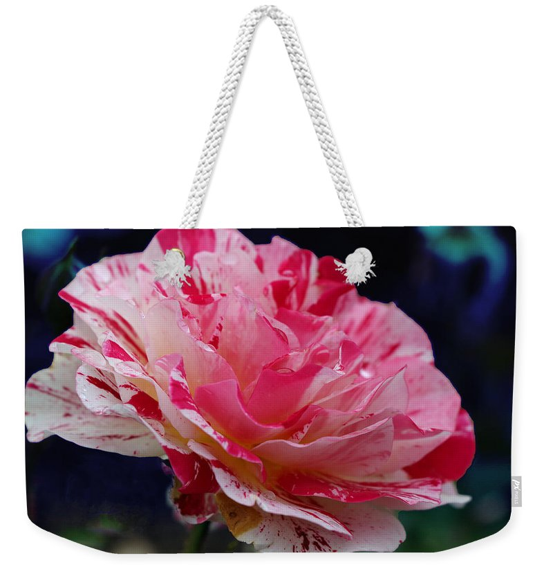 George Burns Rose Weekender Tote Bag featuring the photograph George Burns Floribunda Rose by Allen Beatty