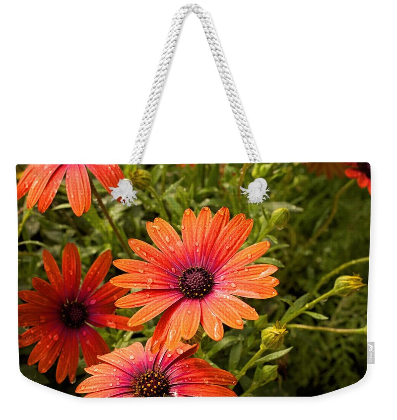 Flower Weekender Tote Bag featuring the photograph Gerbera Daisy by Michael Porchik