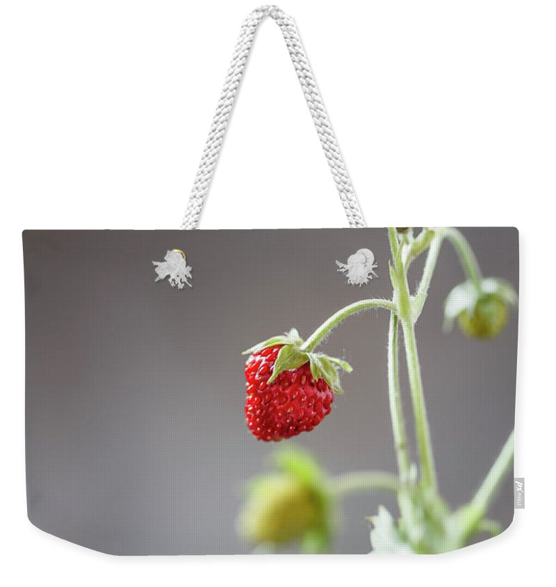 Wild Strawberry Weekender Tote Bag featuring the photograph Germany, Baden Wuerttemberg, Wild by Westend61