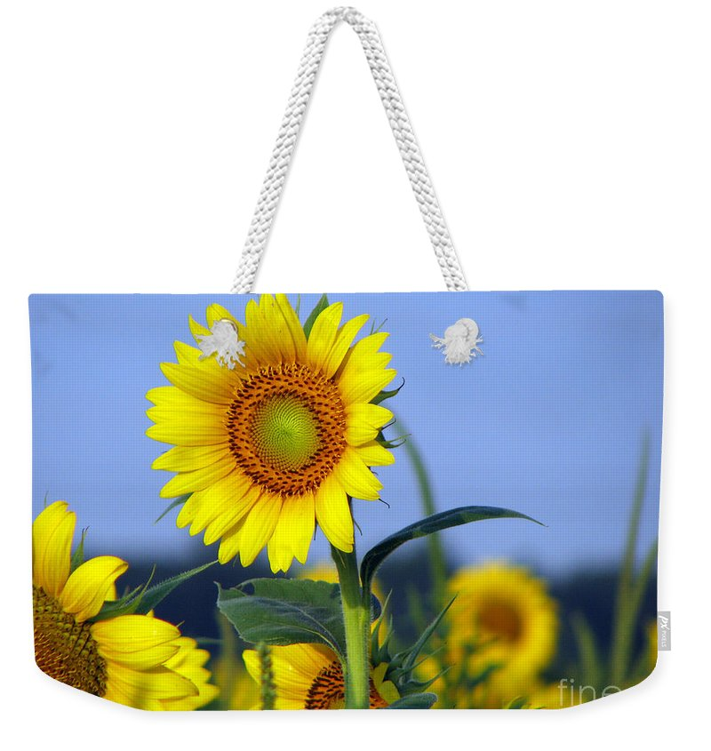 Sunflower Weekender Tote Bag featuring the photograph Getting To The Sun by Amanda Barcon