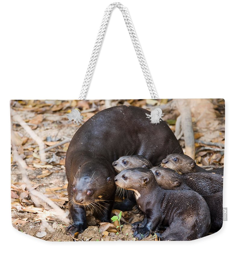 Photography Weekender Tote Bag featuring the photograph Giant Otter Pteronura Brasiliensis by Panoramic Images