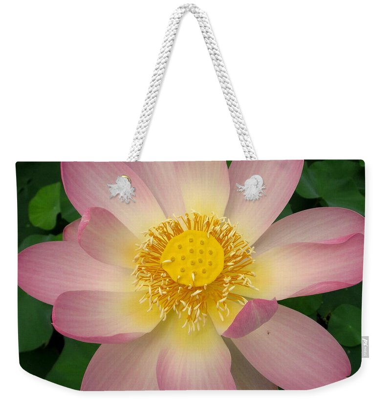 Giant Pink Lotus Flower Weekender Tote Bag featuring the photograph Giant Pink Lotus by Joshua Bales