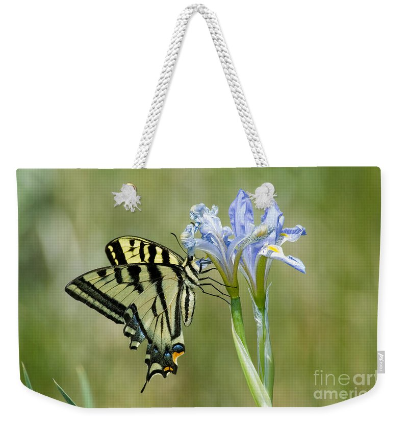 Fauna Weekender Tote Bag featuring the photograph Giant Swallowtail Butterfly by Anthony Mercieca