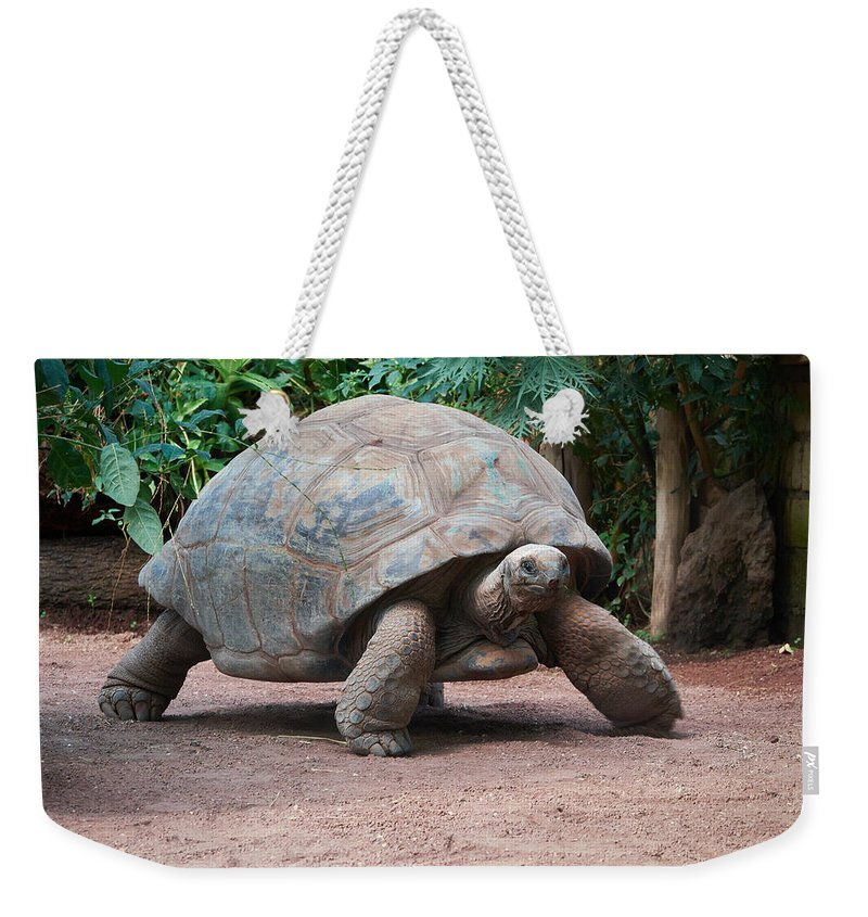 2013. Weekender Tote Bag featuring the photograph Giant Turtle by Jouko Lehto