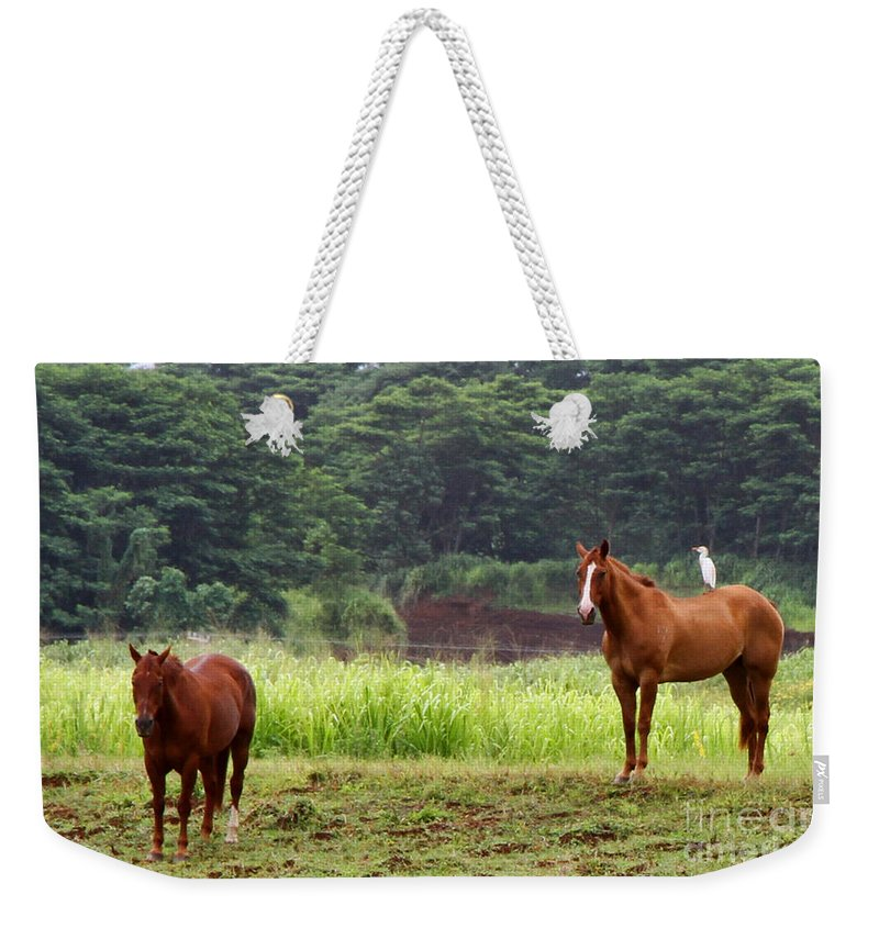 Horse Weekender Tote Bag featuring the photograph Giddy Up Horsy By Diana Sainz by Diana Raquel Sainz