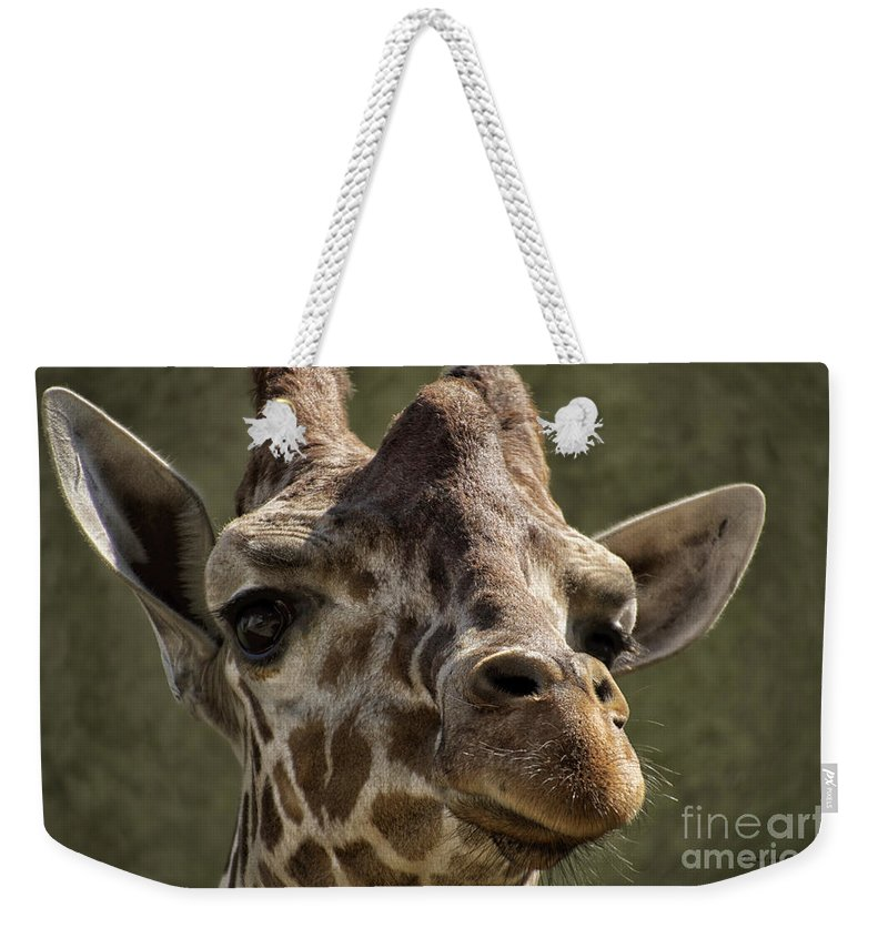 Animals Weekender Tote Bag featuring the photograph Giraffe Hey Are You Looking At Me by Thomas Woolworth