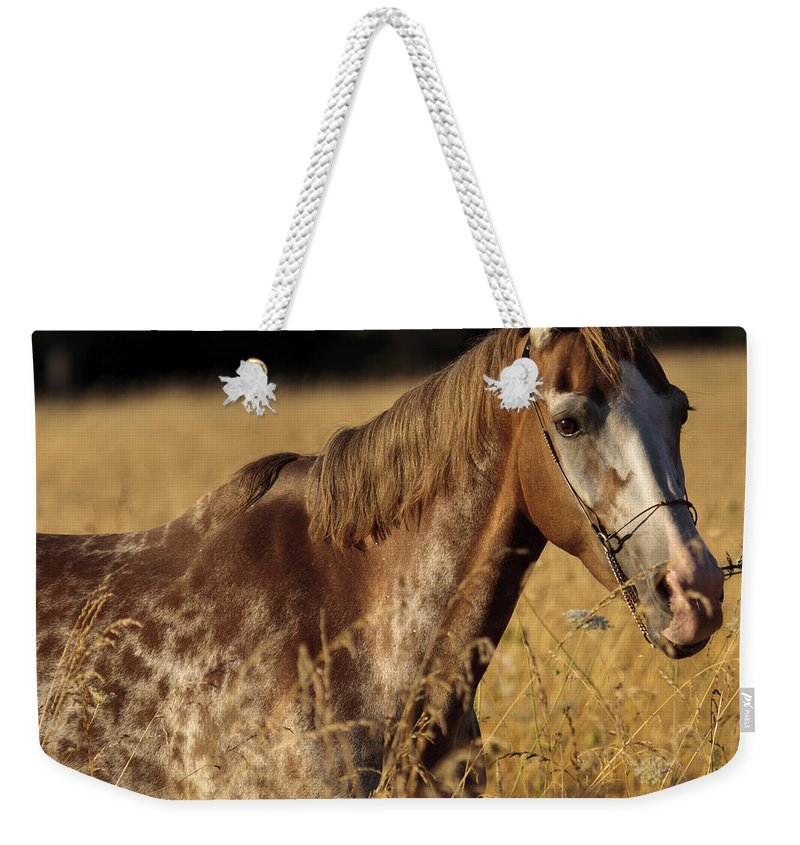 Giraffe Horse Weekender Tote Bag featuring the photograph Giraffe Horse by Wes and Dotty Weber