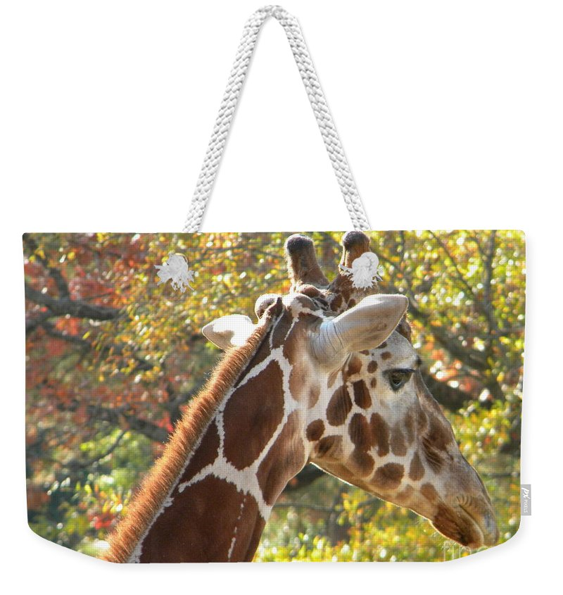 Giraffe Weekender Tote Bag featuring the photograph Giraffe by Nathanael Smith