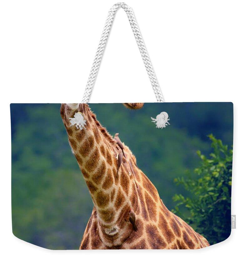 Giraffe Weekender Tote Bag featuring the photograph Giraffe Portrait Closeup by Johan Swanepoel