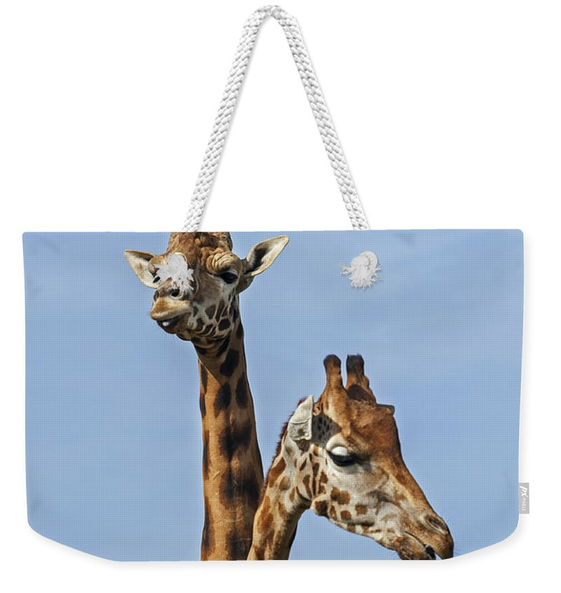 Giraffe Weekender Tote Bag featuring the photograph Giraffes 1 by Arterra Picture Library