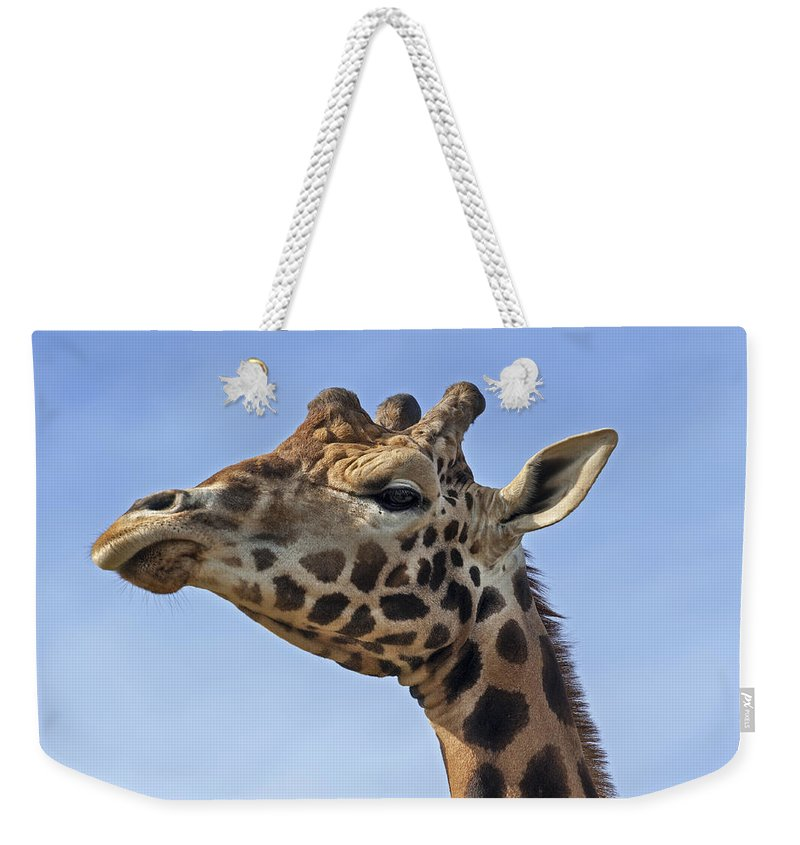 Giraffe Weekender Tote Bag featuring the photograph Giraffes 3 by Arterra Picture Library