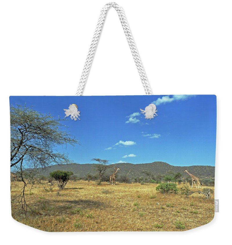Giraffes Weekender Tote Bag featuring the photograph Giraffes In Samburu National Reserve by Tony Murtagh