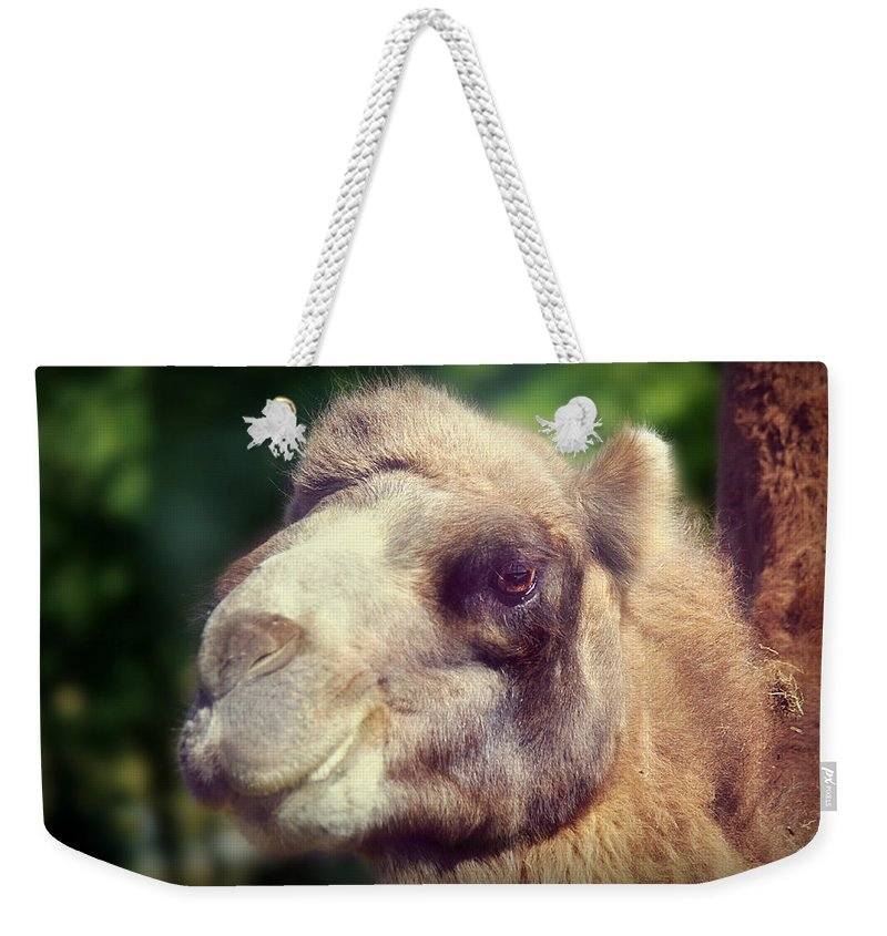 Camel Weekender Tote Bag featuring the photograph Give Me A Kiss by Melanie Lankford Photography