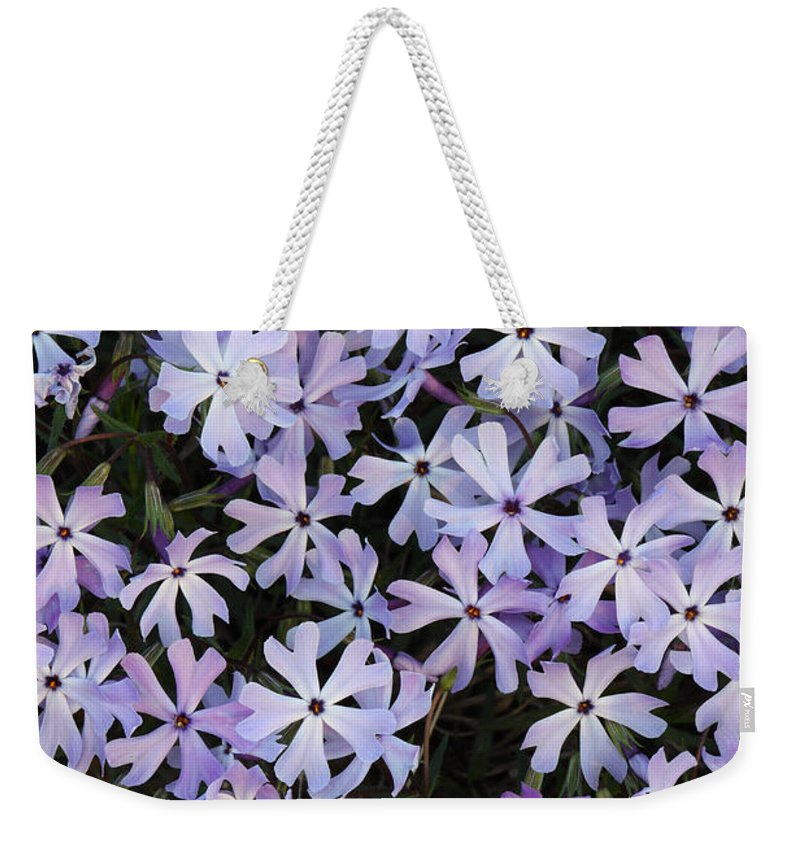 Glade Phlox Weekender Tote Bag featuring the photograph Glade Phlox by Daniel Reed