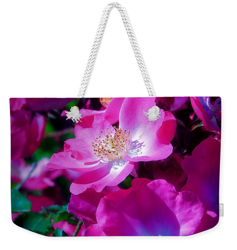 Roses Weekender Tote Bag featuring the photograph Glorious Blooms by Lucinda Walter