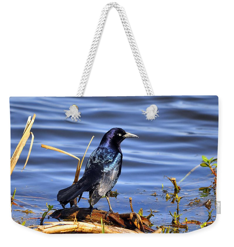 Grackle Weekender Tote Bag featuring the photograph Glorious Grackle by Al Powell Photography USA