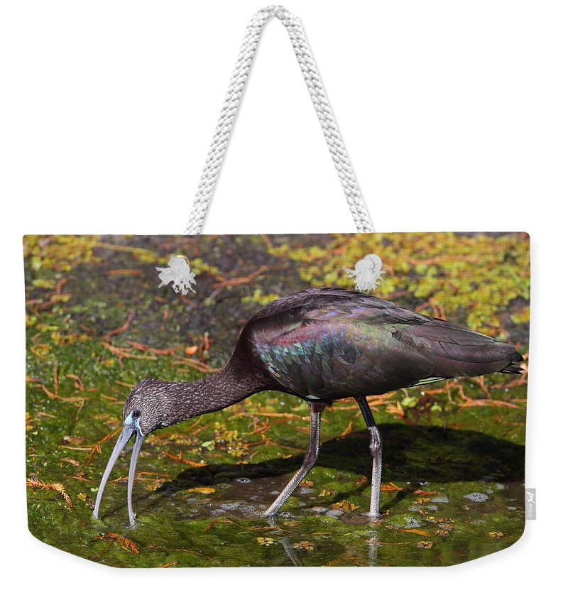 Ibis Weekender Tote Bag featuring the photograph Glossy Ibis by Bruce J Robinson