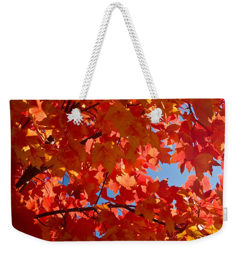 Glowing Weekender Tote Bag featuring the photograph Glowing Fall Maple Colors 3 by Douglas Barnett