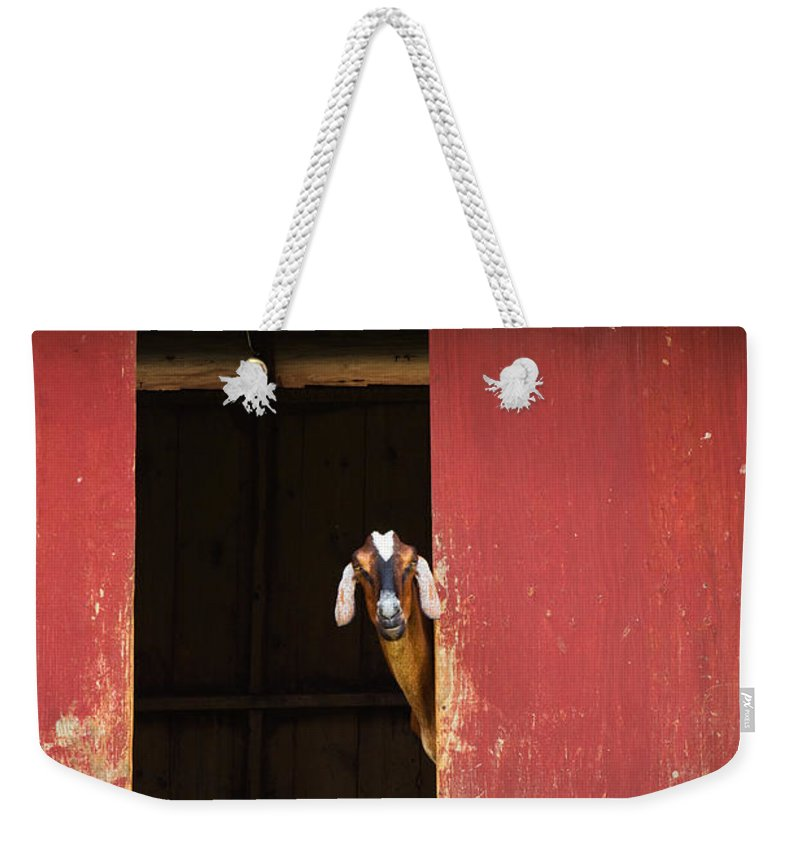 Goat Weekender Tote Bag featuring the photograph Goat In Barn by Stephanie McDowell