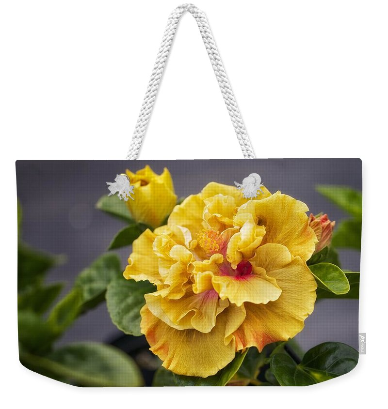 Hibiscus Weekender Tote Bag featuring the photograph Gold Beauty by Jade Moon