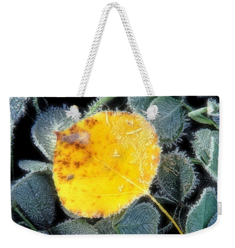 First Frost Weekender Tote Bag featuring the photograph Gold On Green by Bill Morgenstern