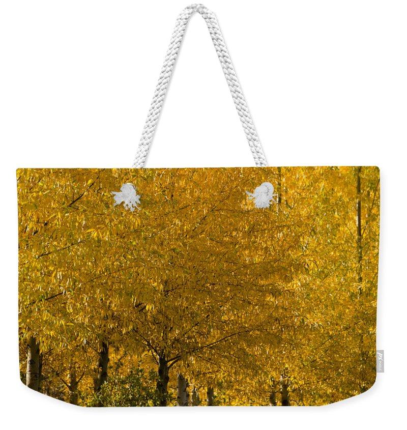 Aspens Weekender Tote Bag featuring the photograph Golden Aspens by Don Schwartz