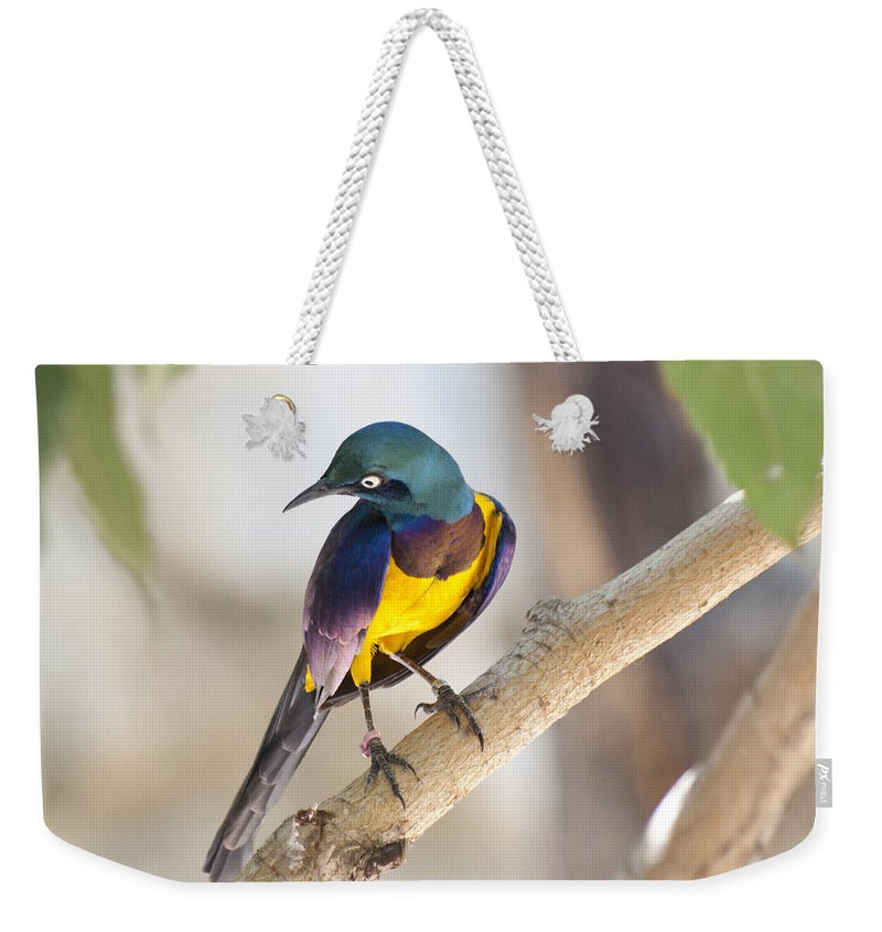 Bird Weekender Tote Bag featuring the photograph Golden-breasted Starling by Jim And Emily Bush
