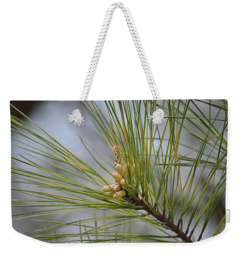 Golden Catkins Of The Great Pine Weekender Tote Bag featuring the photograph Golden Catkins Of The Great Pine by Maria Urso