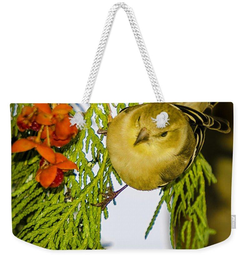 Animals Weekender Tote Bag featuring the photograph Golden Christmas Finch by LeeAnn McLaneGoetz McLaneGoetzStudioLLCcom