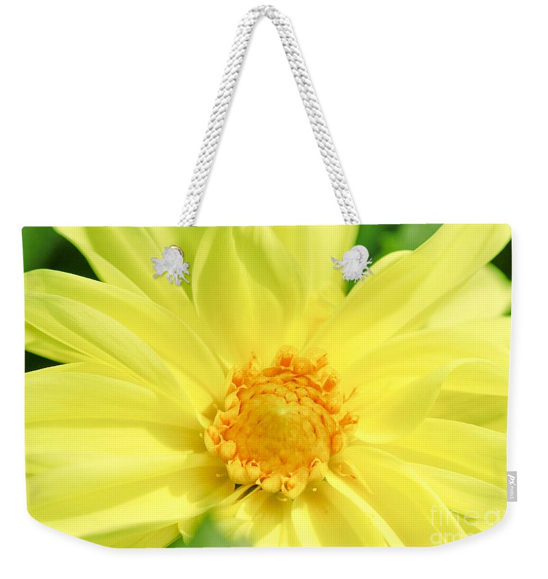 Golden Daisy Weekender Tote Bag featuring the photograph Golden Daisy by Optical Playground By MP Ray