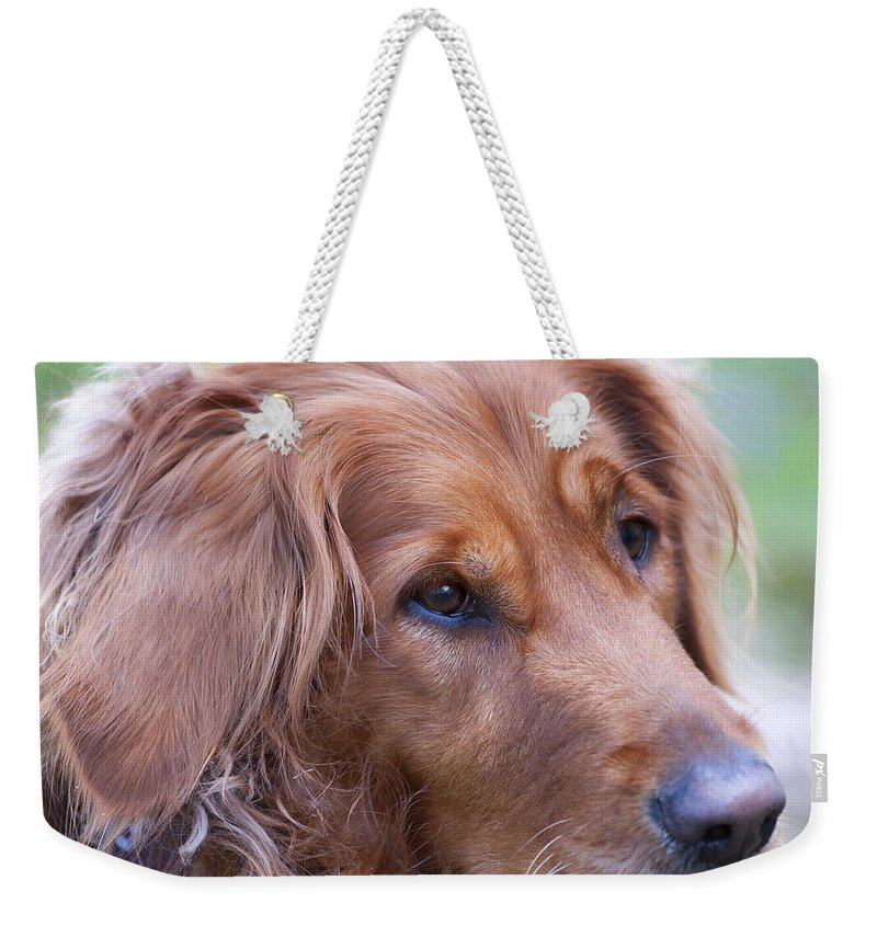 Animals Weekender Tote Bag featuring the photograph Golden Girl by Stephen Anderson