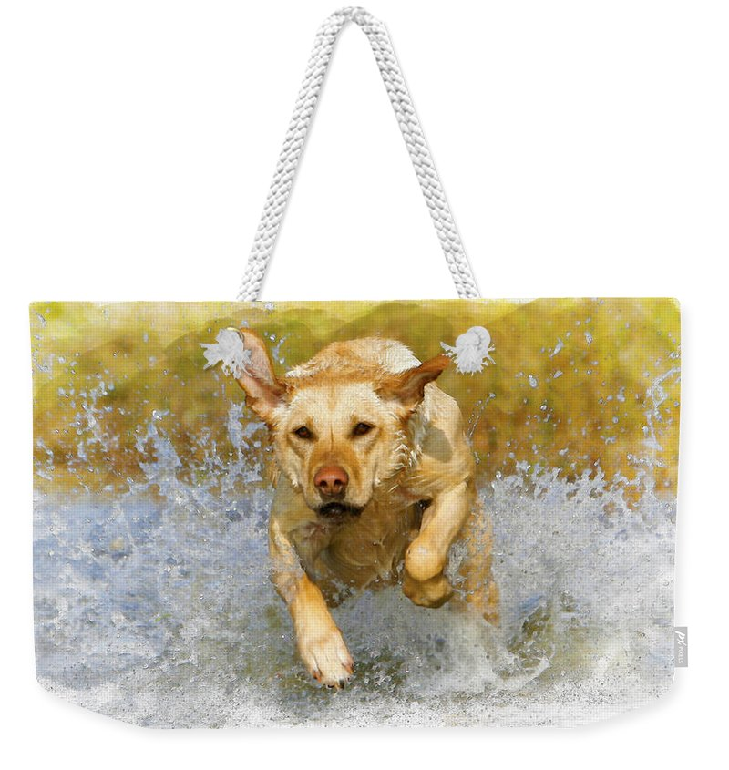 Action Weekender Tote Bag featuring the digital art Golden Labrador by Don Kuing