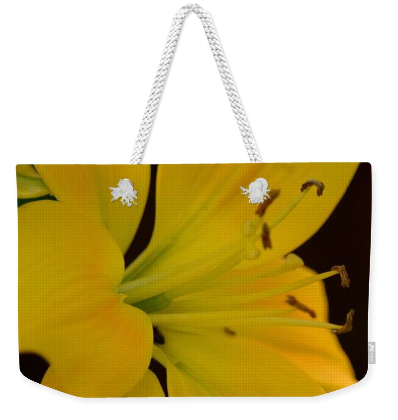 Golden Lily Glow Weekender Tote Bag featuring the photograph Golden Lily Glow by Maria Urso