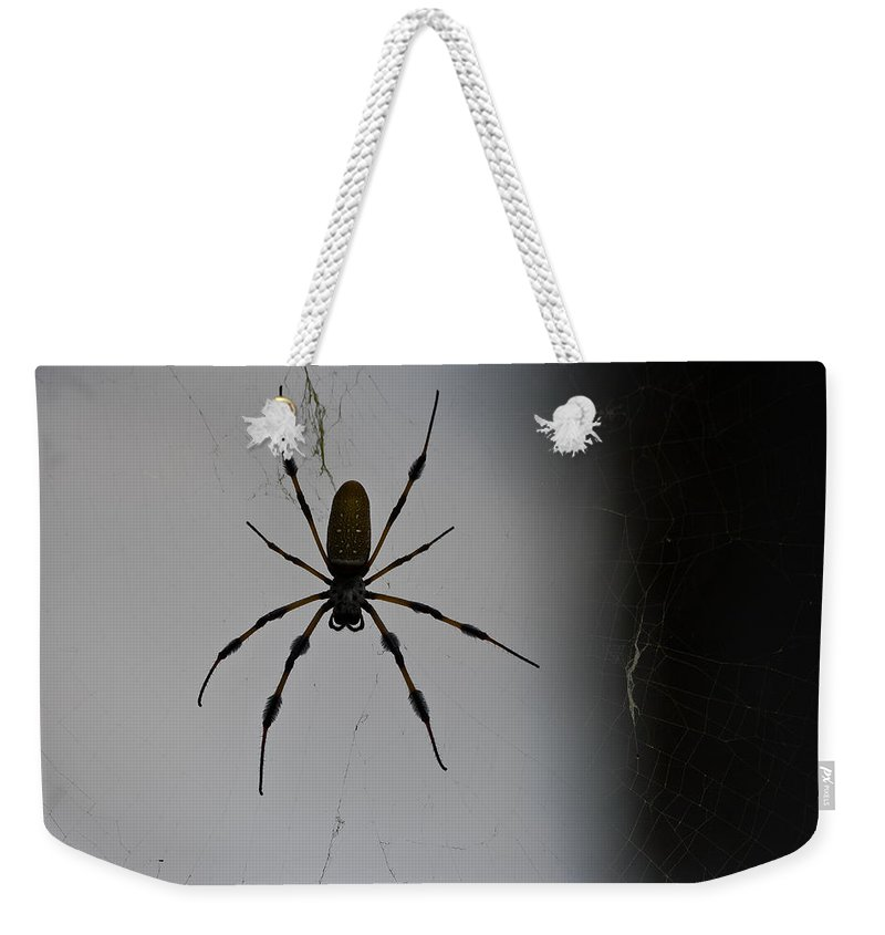 Arachnid Weekender Tote Bag featuring the photograph Golden Orb-weaver by Ed Gleichman