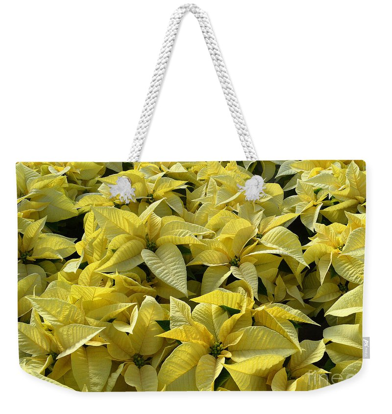 Poinsettias Weekender Tote Bag featuring the photograph Golden Poinsettias by Catherine Sherman